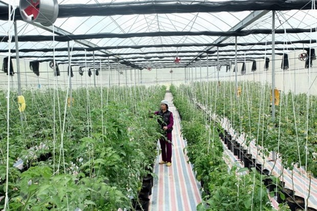 Sci-tech application key to developing smart agriculture hinh anh 1