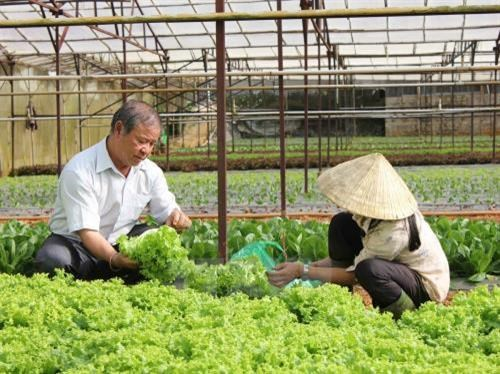Ministry to select cooperatives for hi-tech application hinh anh 1