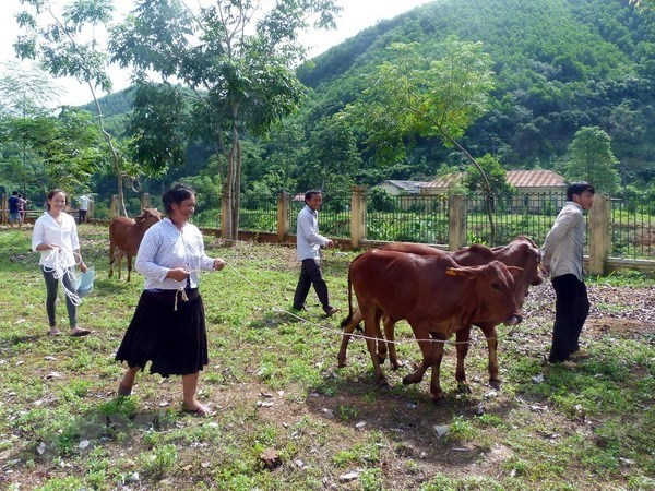 Activities to care for the poor draw public attention hinh anh 1