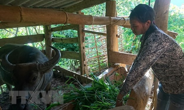 ThuaThien-Hue spends 11 million USD to support mountainous locals hinh anh 1