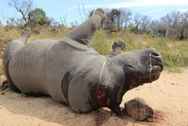 Short film calls for end to rhino massacres hinh anh 1