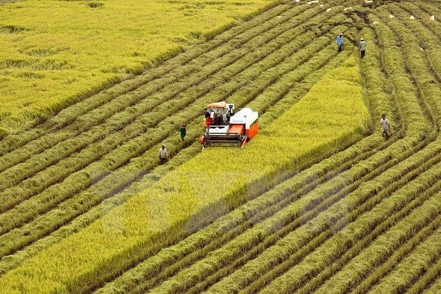 Can Tho boosts agricultural shake-up towards sustainable development hinh anh 1