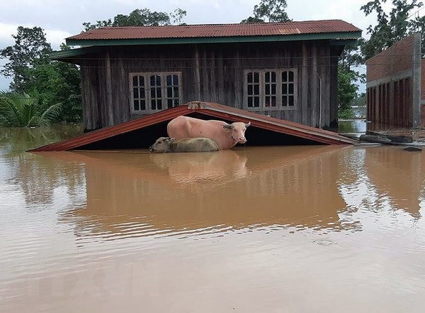 Widespread flooding wrecks havoc in Laos hinh anh 1