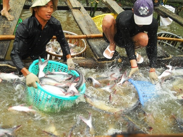 Adaptation measures needed to sustainably develop aquaculture hinh anh 1