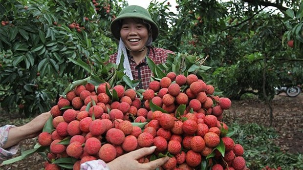 Vietnam struggles to export fruits to demanding markets hinh anh 1