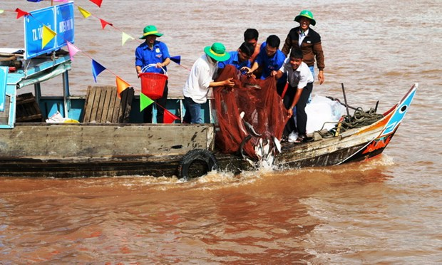 Over 7.6 tonnes of fish fry released in An Giang hinh anh 1