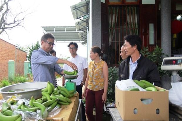 Lam Dong exports Laba banana to Japan hinh anh 1