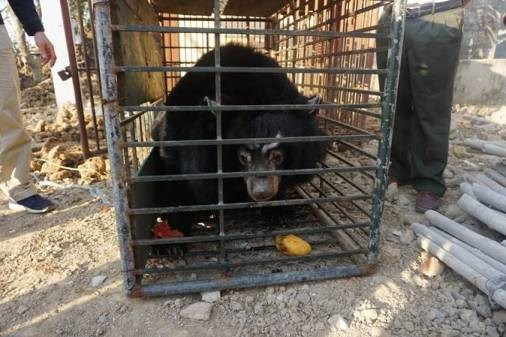 Last private bear bile farm in Tien Giang closed hinh anh 1