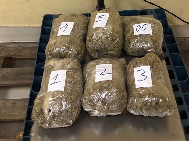 Marijuana trafficking ring from US to Vietnam uncovered hinh anh 1