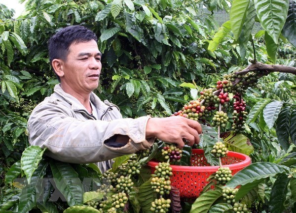 New approach to tapping Chinese farm produce market urged hinh anh 1