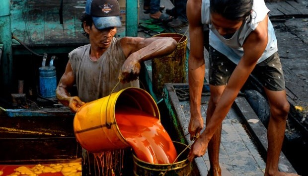 Indonesia's crude palm oil output to climb to 40-42 mln tonnes hinh anh 1