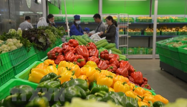 Vegetable, fruit exports hit 2.7 billion USD in eight months hinh anh 1