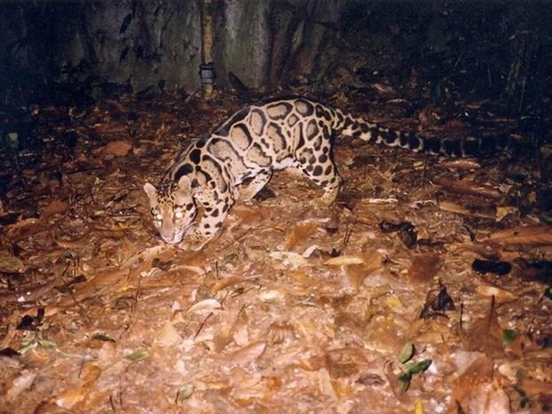 VEA, Four Paws work to save wildlife animals hinh anh 1