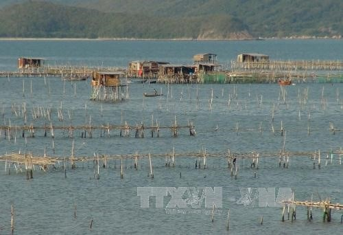 Khanh Hoa approves ambitious fishery development plan hinh anh 1