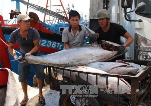 Thua Thien-Hue spends 1.5 million USD to support fishermen hinh anh 1