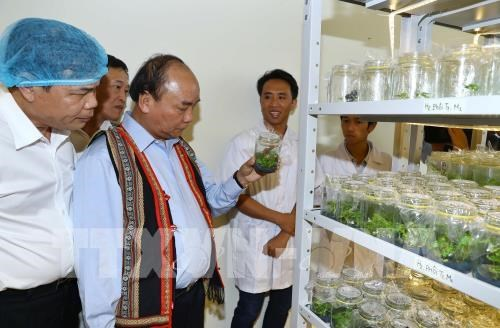 PM: Ngoc Linh ginseng should be competitive with global brands hinh anh 2