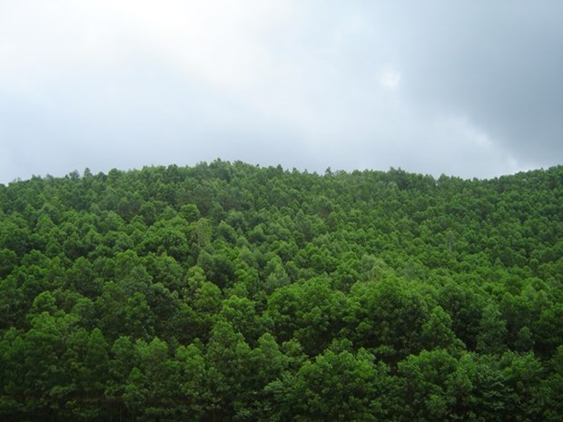 Vietnam plants 130,858ha of production forest in 8 months hinh anh 1