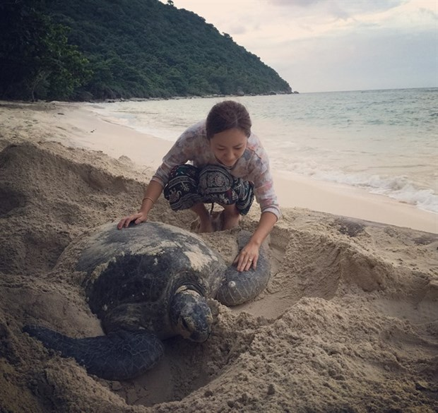 Con Dao Island pioneers sea turtle protection hinh anh 1