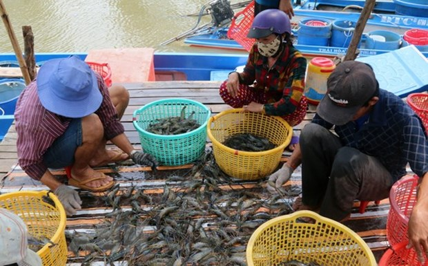 Removing EC's yellow card key to boosting seafood exports hinh anh 1