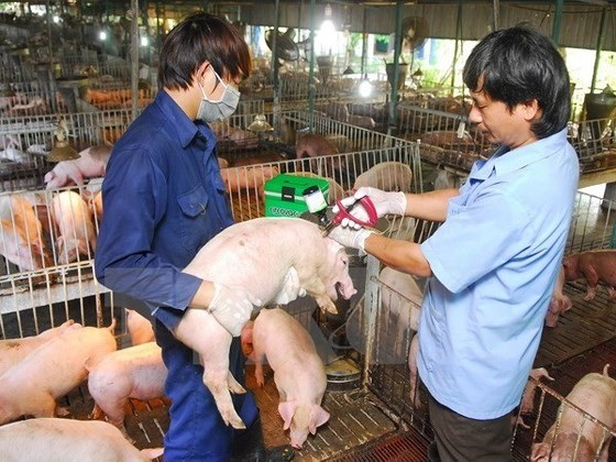 Measures urged to be taken to prevent African Swine Fever hinh anh 1