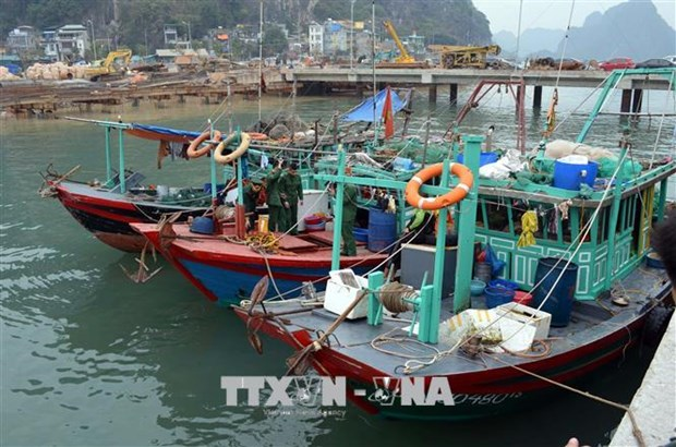 Fishing to be forbidden in Ha Long Bay's natural reserves hinh anh 1