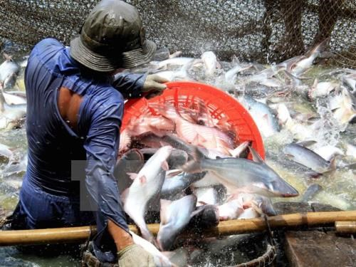 US cuts anti-dumping taxes on Vietnamese catfish hinh anh 1