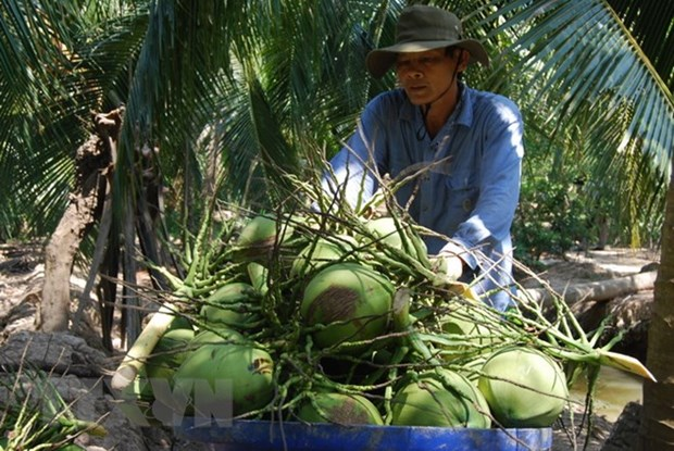 Ben Tre calls for more investment in agriculture hinh anh 1