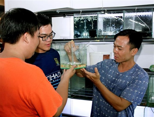 HCM City eyes 23 million USD from ornamental fish exports hinh anh 1