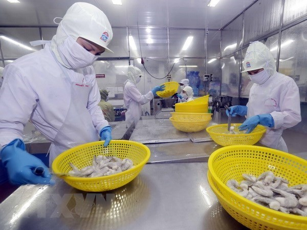 An Giang province develops giant river prawn farming area hinh anh 1
