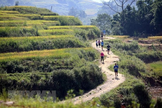 Over 3,100 runners compete in Sa Pa int'l mountain marathon hinh anh 1