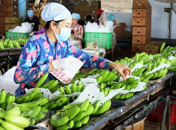 Vietnam's fruit, veggie exports likely to exceed 4 billion USD hinh anh 1