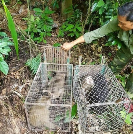 Phong Nha-Ke Bang National Park releases 11 rare animals hinh anh 1