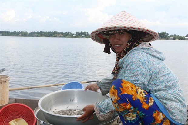 Measures needed to help Mekong Delta farmers cope with floods hinh anh 1