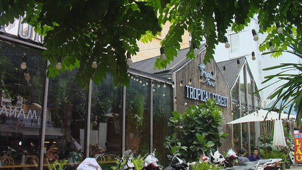 Tropical forest coffee in Hanoi attracts young people hinh anh 1