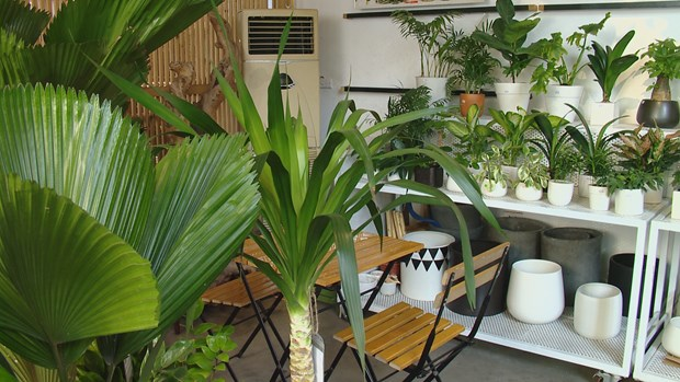 Tropical forest coffee in Hanoi attracts young people hinh anh 3