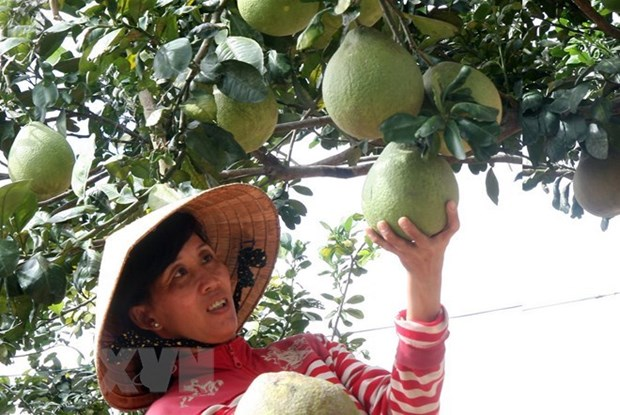 Fruit, veggie exports likely to hit 3.8 billion USD hinh anh 1