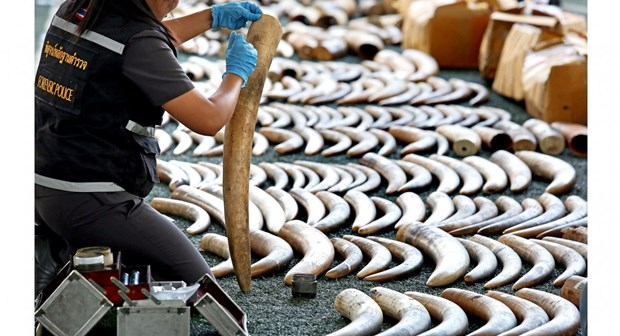 Thailand removed from CITES' ivory watch list hinh anh 1
