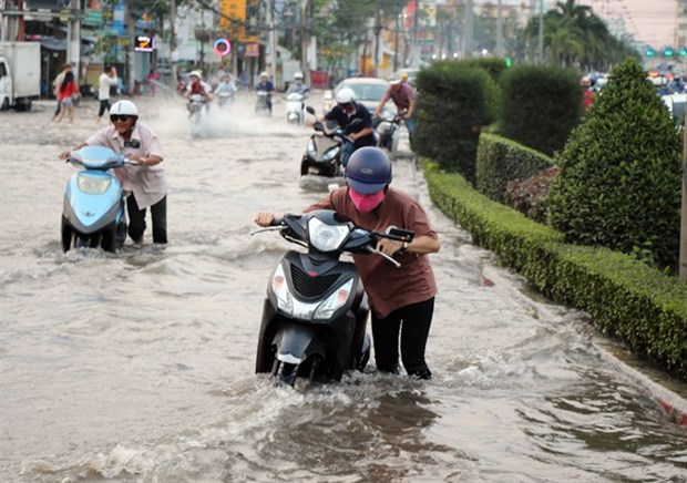Mekong Delta fights flooding from high tides hinh anh 1