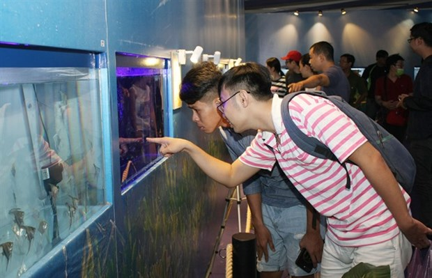 HCM City eyes ornamental fish breeding hinh anh 1