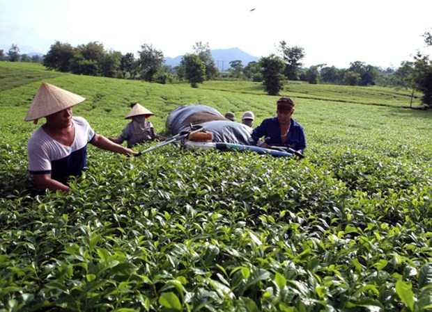 Phu Tho pushes high-tech application in agricultural production hinh anh 1