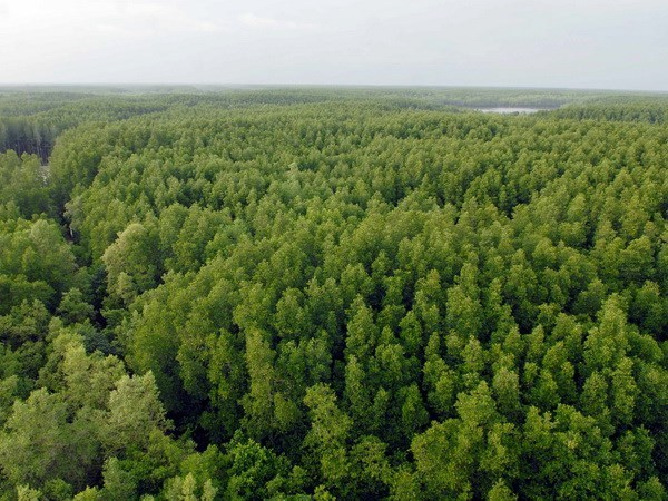 Finland helps Vietnam build forestry database hinh anh 1