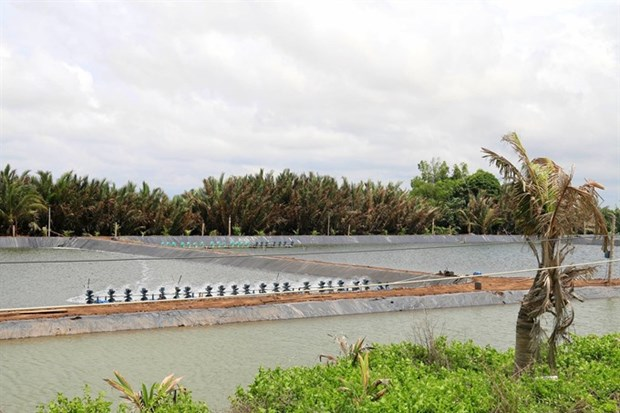 Tien Giang develops saltwater, brackish-water aquaculture hinh anh 1