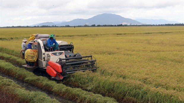 Southern region hits target for rice harvest hinh anh 1