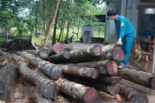 Timber farmers should think big to boost growth hinh anh 1