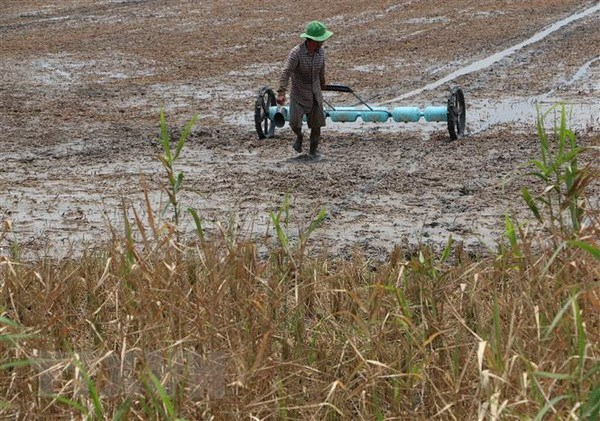 Mekong Delta likely to face drought, salinity in winter-spring crop hinh anh 1