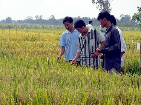 Hau Giang, RoK organisation continue hi-tech farming cooperation hinh anh 1