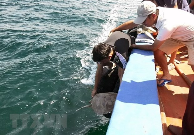 Kien Giang: 12 sea turtles returned to nature hinh anh 1