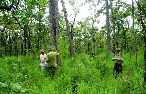 Vietnam, Laos step up collaboration in forestry law enforcement hinh anh 1