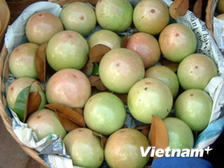 ​Tien Giang: 400 tonnes of star apples to set off for US hinh anh 1