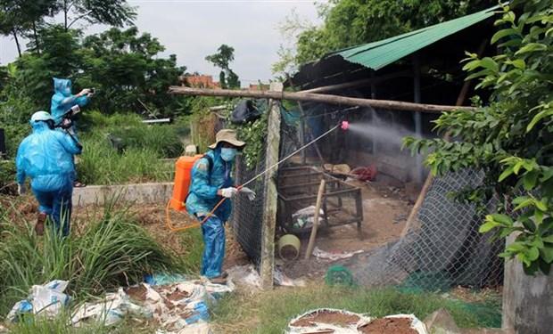 Bird flu detected in Phu Yen province hinh anh 1